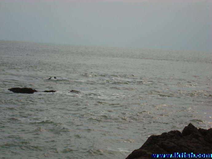 浮游矶钓基础知识之二十一:根据潮流、风、浪、光线、海水浑浊度选择钓场