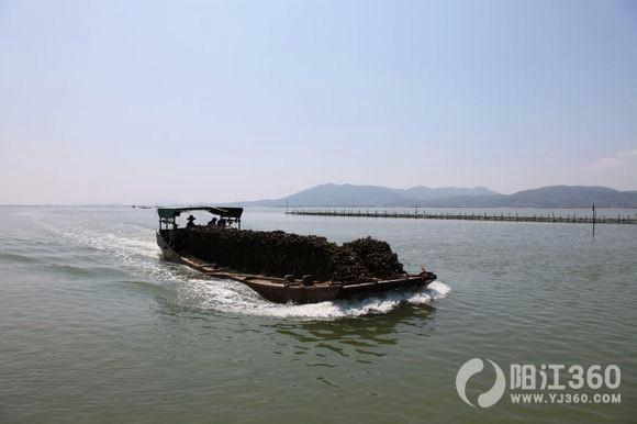 阳江蚝乡-程村红树林