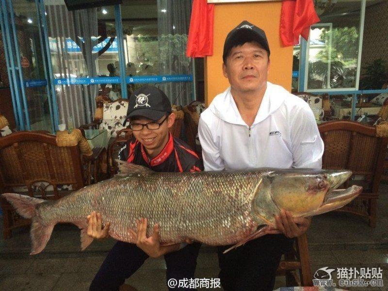 四川父子钓起98.4斤重鳡鱼 身长1.63米