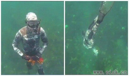 澳洲一男子潜水,结果活生生被5米长大白鲨生吞了...