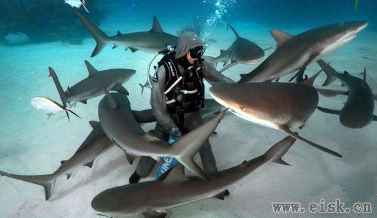 被鲨鱼群包围后还能淡定投食!