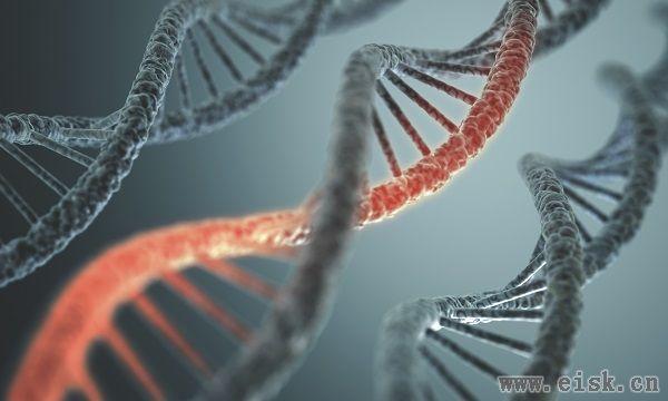 研究发现:删除一条基因可延长60%的寿命