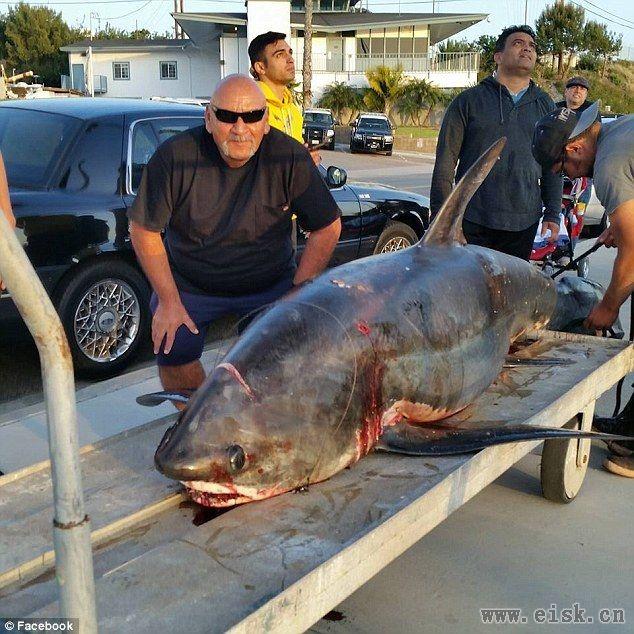 美国渔夫捕获6米长深海巨鲨:重250公斤