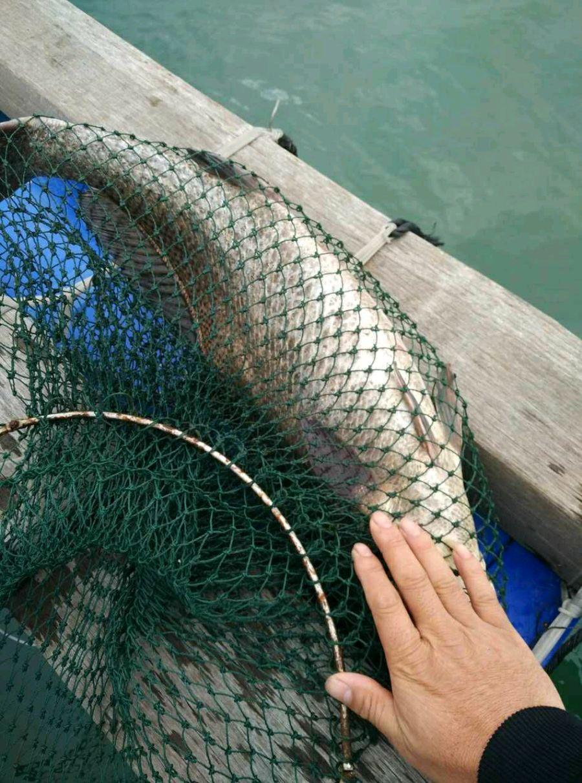 第三条巨物出水 老伦再斩8斤鳘鱼