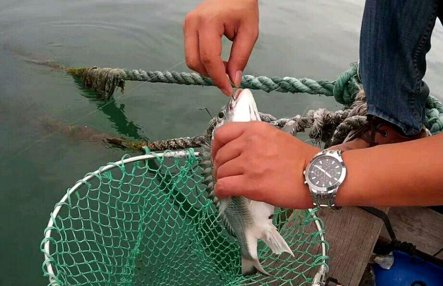 第一次看到上鱼的自己感觉蛮帅的