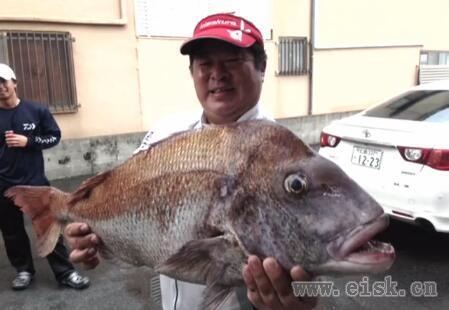 Kizakura 年中釣れるカキ筏で全層釣法