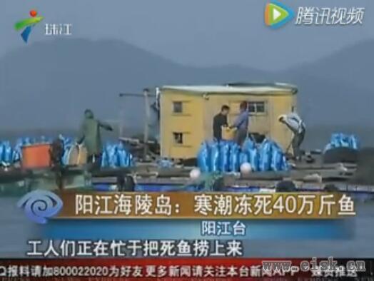 阳江海陵岛:寒潮冻死40万斤鱼!