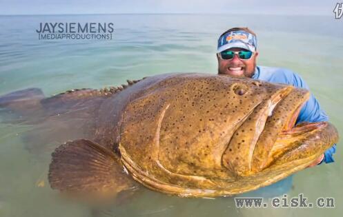男子钓到重达181公斤巨型石斑鱼后放生