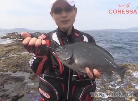 Kizakura CORESSA & HUWARI