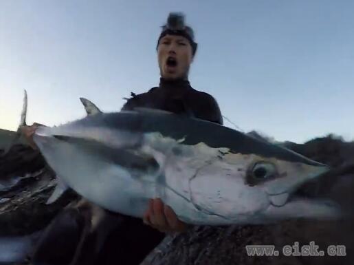 岩礁上挑战大型黄鳍吞拿鱼