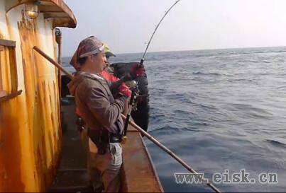 绿头鸟-铁板路亚、船钓