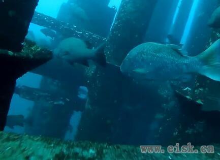 南油海钓平台水下揭秘