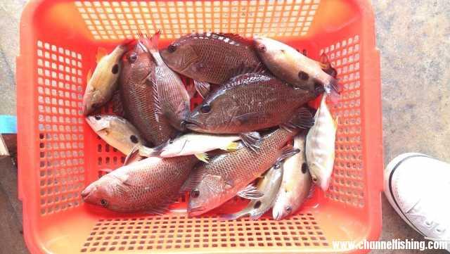 新筏仔在東山的魚獲