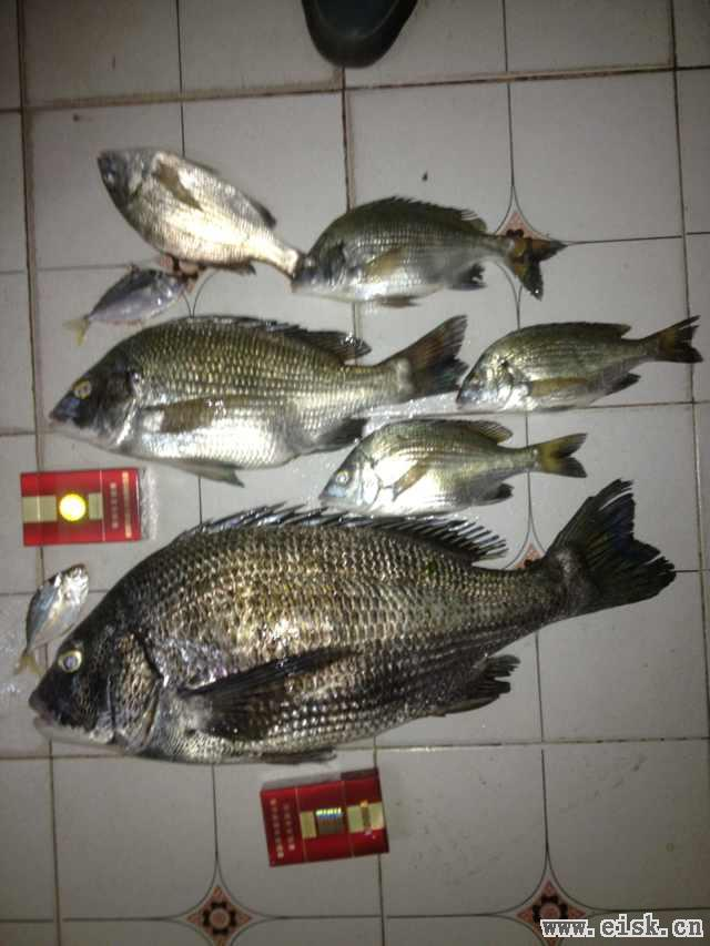 2014年2月27日马尾岛收获大黑鲷
