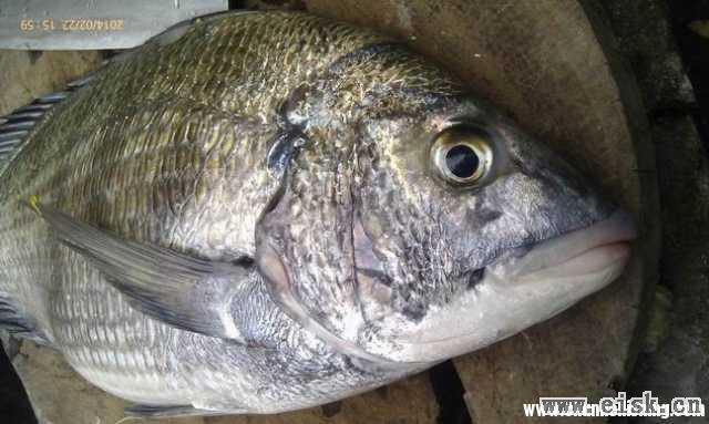 闲来无事,把2月22日的鱼发来放下毒