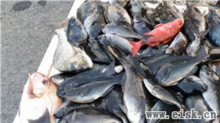 上海海钓俱乐部2014年2月日本佐贺大黑毛之行