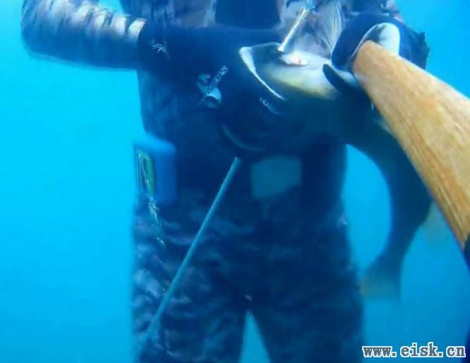 另类的玩法-三亚潜水打鱼