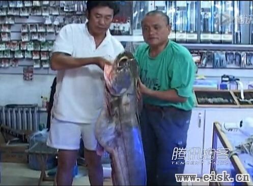 男子钓到1.34米长鲶鱼王众人拖拽45分钟