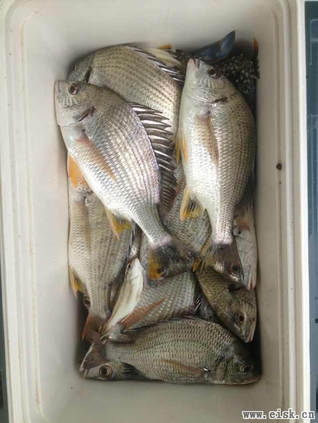 [8-31]朋友今天港口的渔获