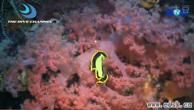 【太迷人了】海底世界之微观世界
