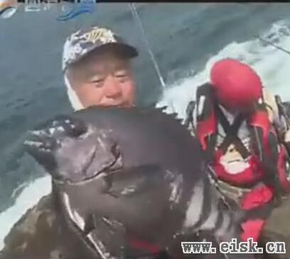 海礁石鲷追踪 (上) 石礁斩获大鯛