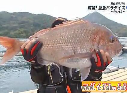 鱼排钓巨魚 (大物) Part2