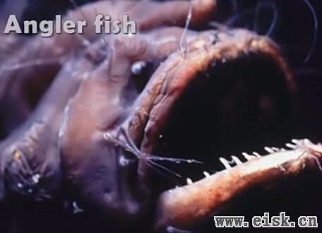 十种奇特海洋生物