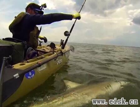 单人路亚舟海钓巨物鲨鱼