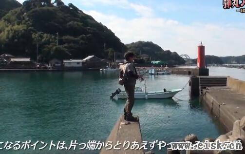 エギングランガン弾丸アオリイカ笛木展雄-和歌山県串本