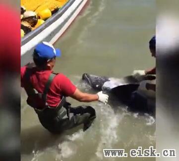 《海豚湾》导演瑞克再次在日本眼睁睁看着海豚被围堵杀害却无能为力