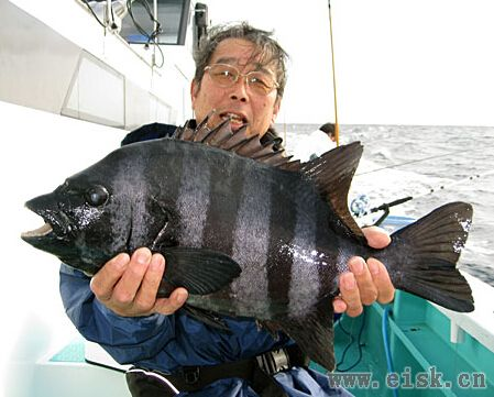 《Rapala游钓世界—日本篇》10斤的石鲈石斑都是这样钓的