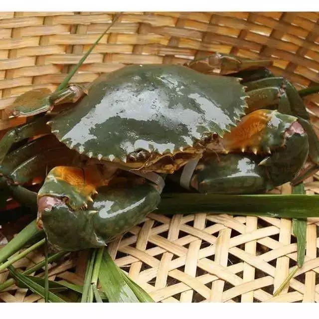 分辨水蟹、奄仔、重皮、膏蟹、肉蟹、黄油蟹...