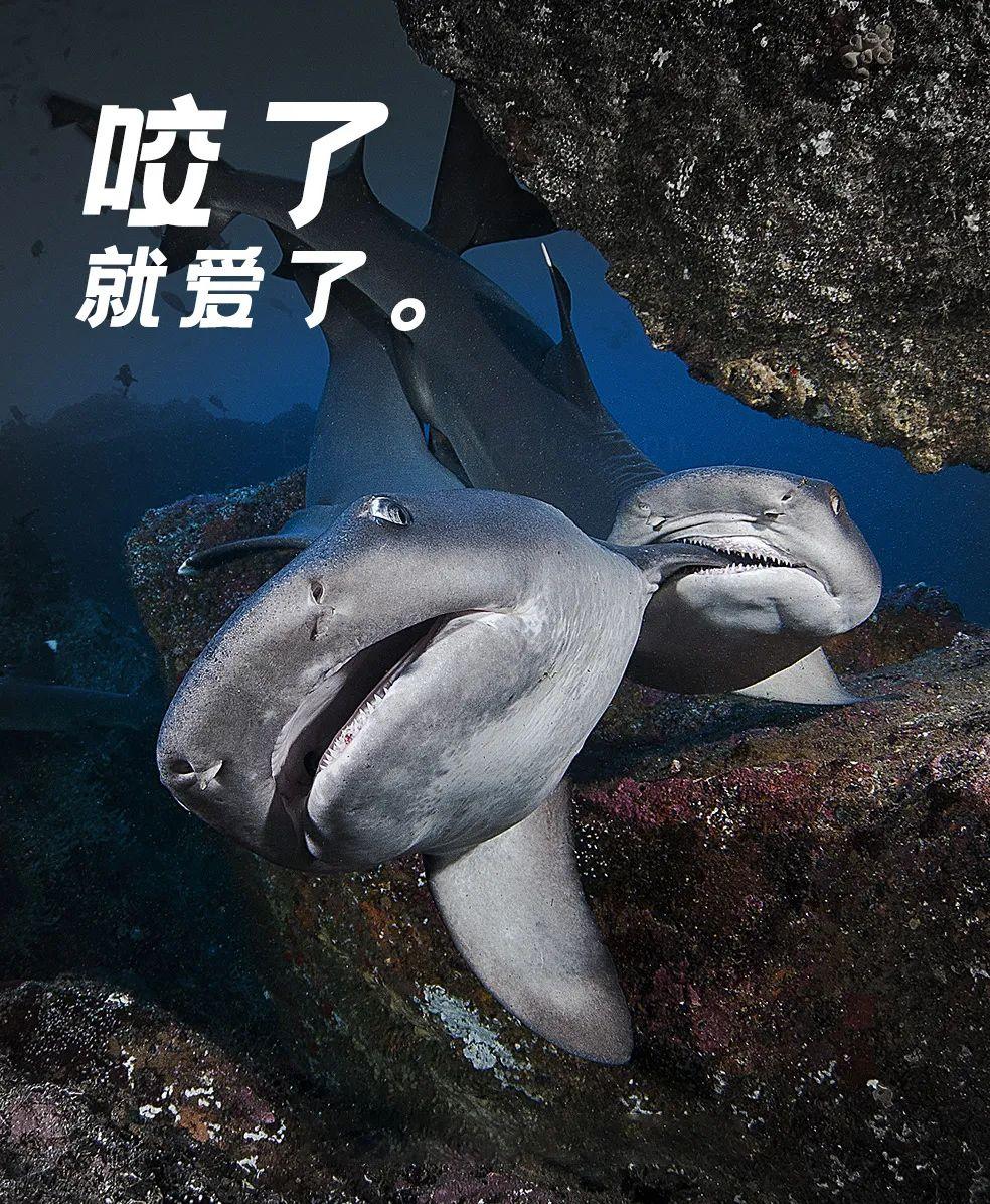 鲨鱼厚爱:一边咬咬一边啪啪