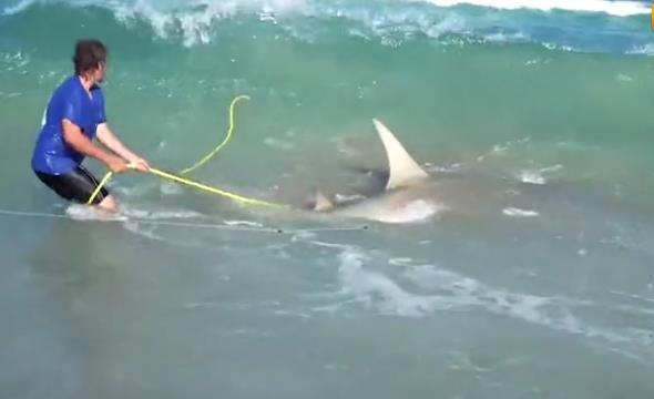上辈子拯救了银河系?海钓五次钓上5条大鲨鱼!最重达550公斤!