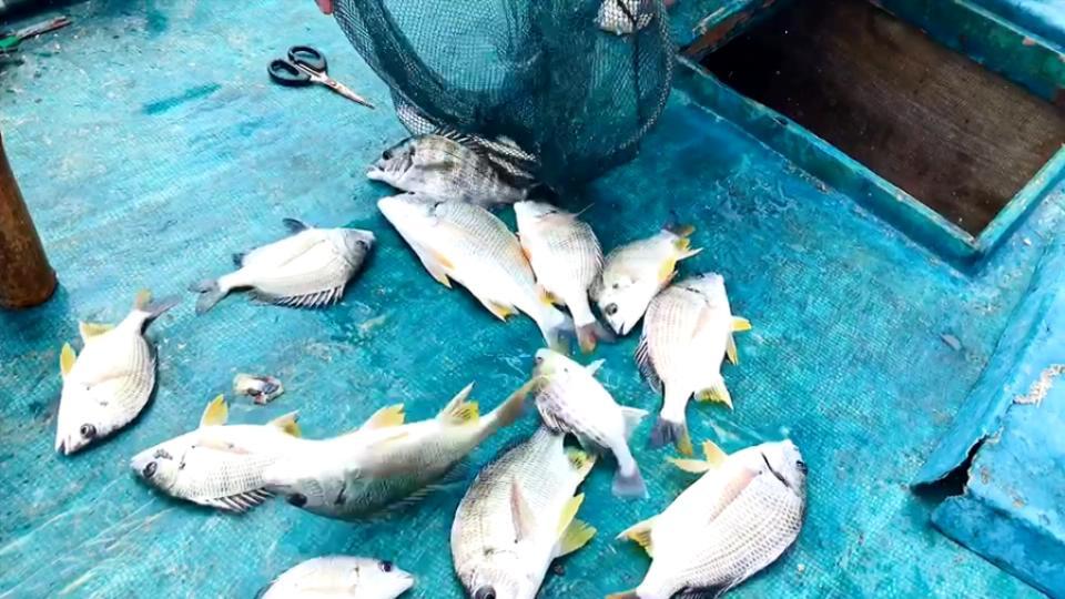 闸坡长沙环钓全世界很好吃的鱼,一个上午十几条吧