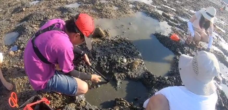 """海陵岛下角赶海挖到""""宝坑""""里面有很多沙螺"""